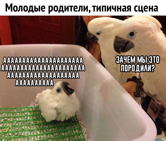 изображение: Молодые родители. Типичная сцена. Ребенок плачет: - Ааааааа! - Зачем мы это породили #Прикол