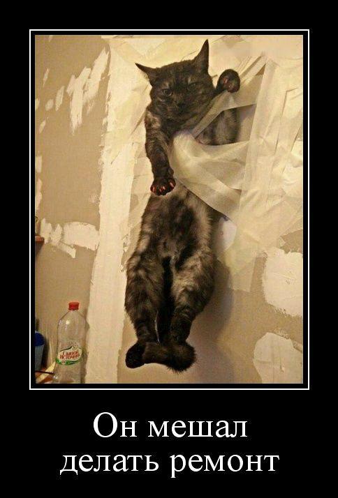 изображение: Он мешал делать ремонт #Прикол