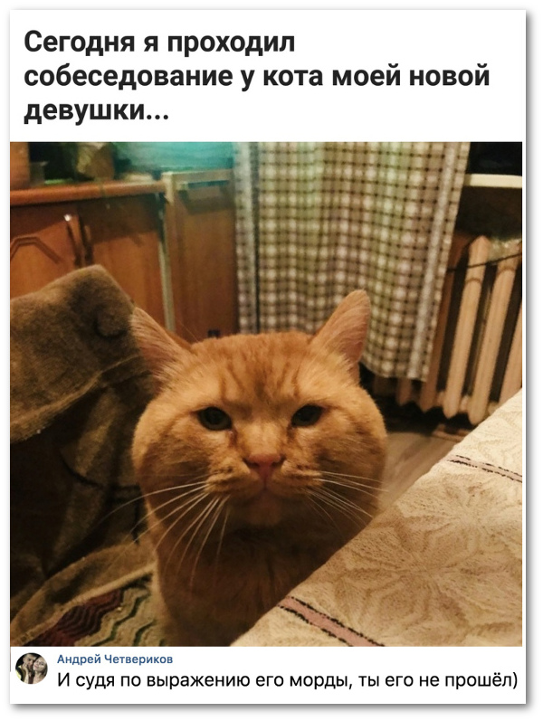изображение: - Сегодня я проходил собеседование у кота моей новой девушки. - И судя по выражению его морды, ты его не прошел #Прикол