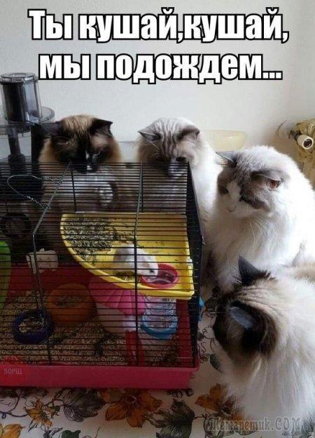 изображение: - Ты кушай, кушай, мы подождем... #Котоматрицы