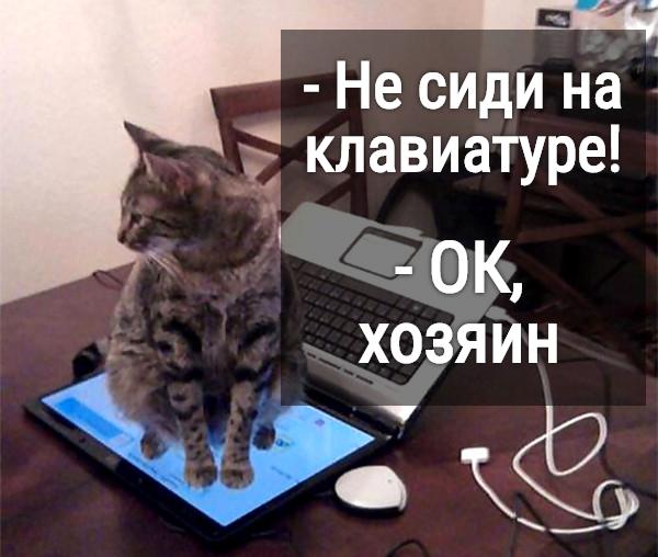 изображение: - Не сиди на клавиатуре! - Ок, хозяин #Прикол