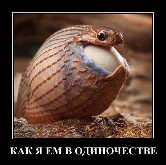 изображение: Как я ем в одиночестве #Котоматрицы