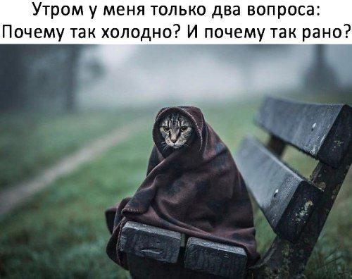 изображение: Утром у меня только 2 вопроса: почему так холодно и почему так рано? #Котоматрицы
