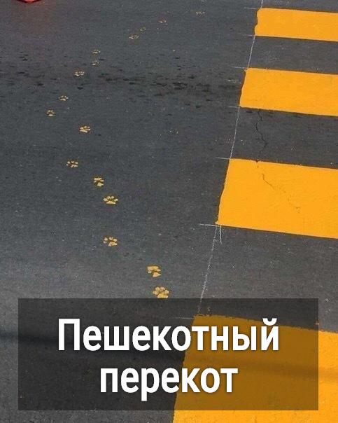 изображение: Пешекотный перекот #Котоматрицы