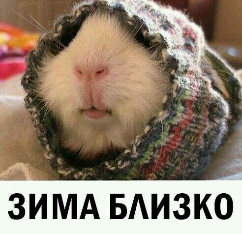 изображение: Зима близко #Котоматрицы