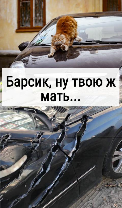 изображение: Барсик, ну твою ж мать... #Котоматрицы