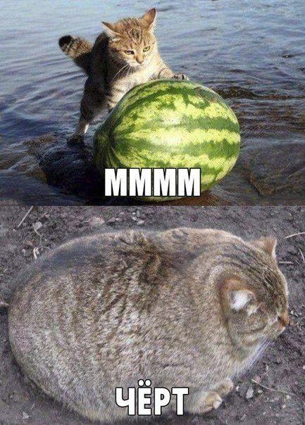 изображение: Кот против арбуза: - Мммм! Спустя время: Чёрт! #Котоматрицы