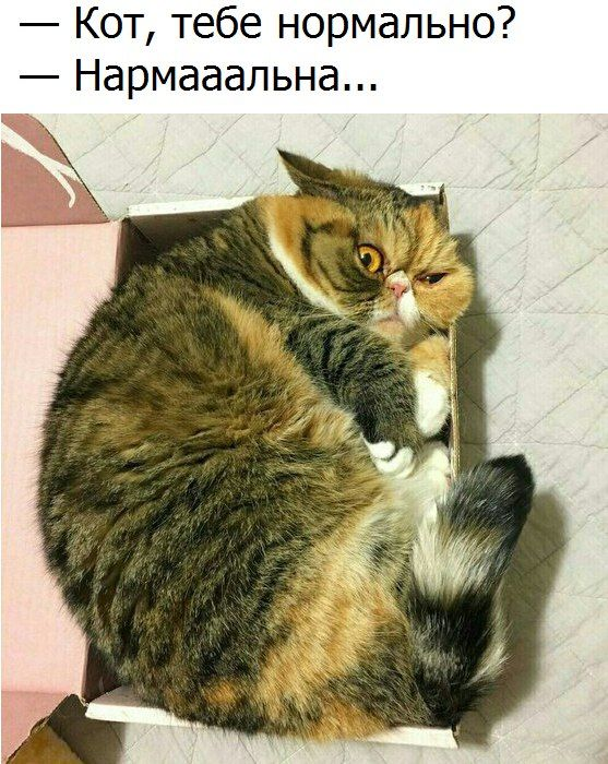 изображение: - Кот, тебе нормально? - Нармааальна #Котоматрицы