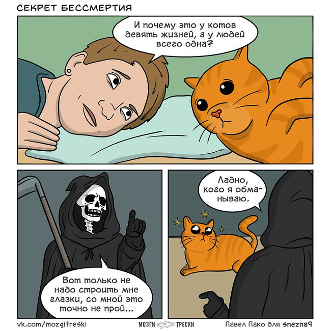 изображение: Секрет бессмертия: И почему это котов 9 жизней, а у людей всего одна? Смерть: - Вот только не надо строить мне глазки, со мной это точно не пройдет... Ладно, кого я обманываю ... #Котоматрицы