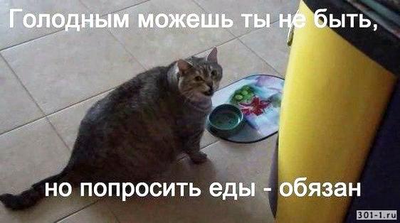 изображение: Голодным можешь ты не быть, но попросить еды обязан #Котоматрицы