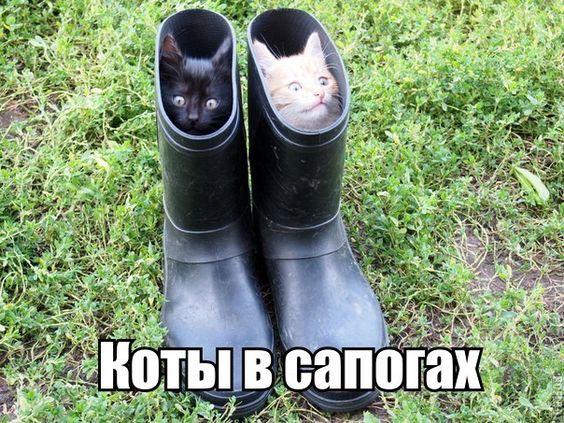 изображение: Коты в сапогах #Котоматрицы