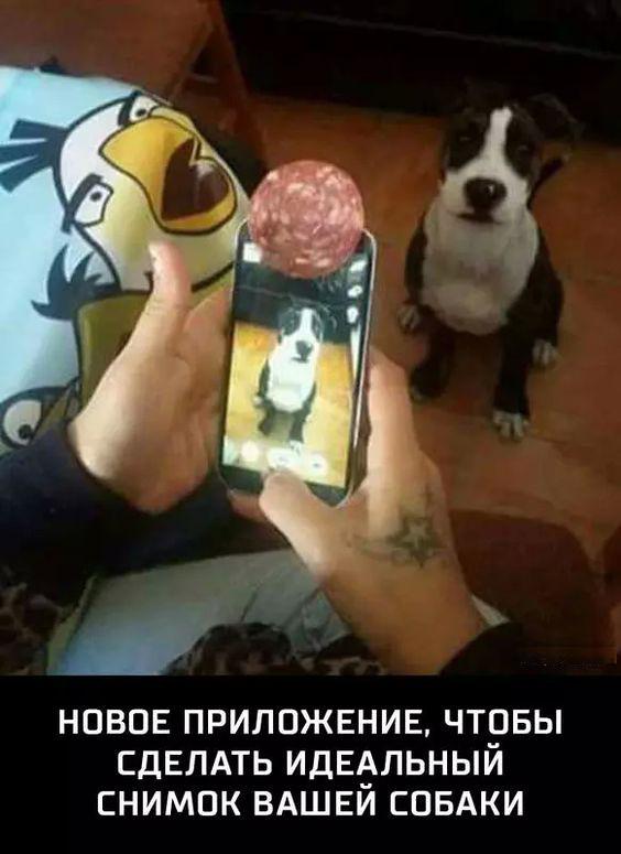 изображение: Новое приложение, чтобы сделать идеальный снимок вашей собаки #Прикол