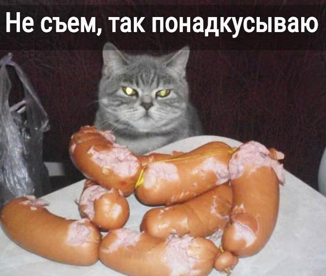 изображение: Бесстыжая кошачья морда: Не съем, так понадкусываю #Котоматрицы