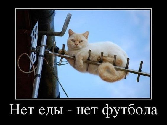 изображение: Нет еды - нет футбола #Котоматрицы