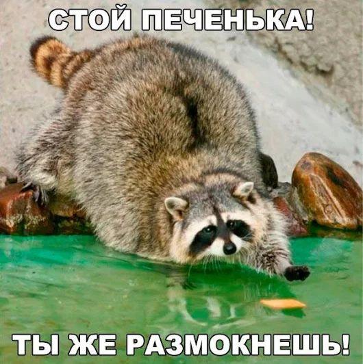 изображение: Стой, печенька! Ты же размокнешь! #Котоматрицы