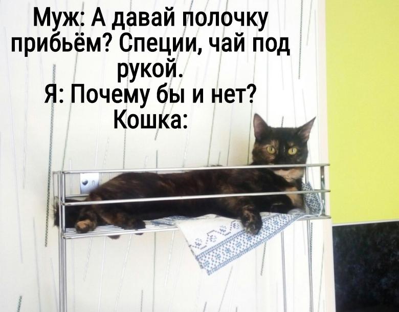 изображение: Муж: А давай полочку прибьём? Специи, чай под рукой. Я: Почему бы и нет? Кошка: #Котоматрицы