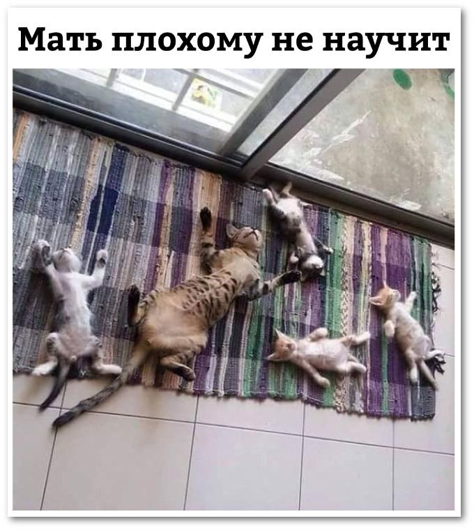 изображение: Мать плохому не научит #Котоматрицы