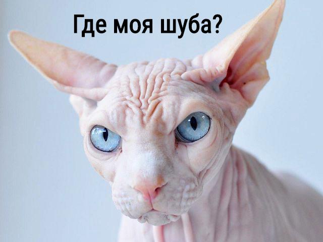 изображение: Где моя шуба? #Котоматрицы
