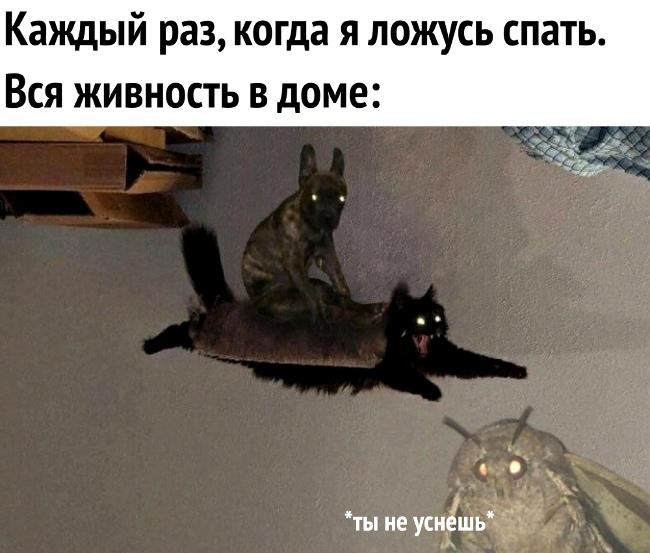 изображение: Каждый раз, когда я ложусь спать. Вся живность в доме: - Ты не уснёшь! #Котоматрицы