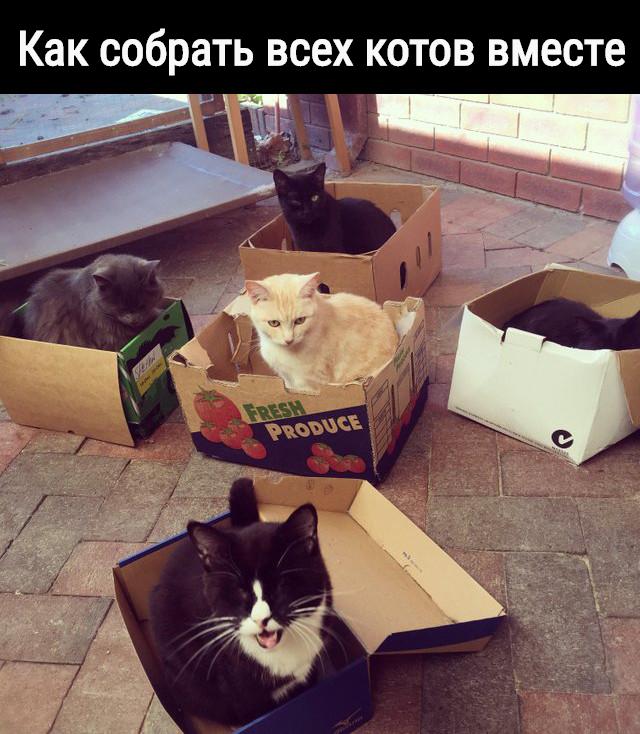 Как собрать всeх котов вмeстe | #прикол