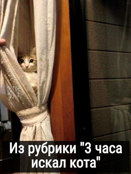 изображение: Из рубрики ' 3 часа искал кота' #Котоматрицы