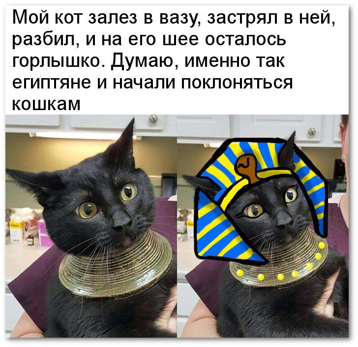 изображение: Мой кот залез в вазу, застрял в ней, разбил и на его шее осталось горлышко. Думаю, именно так египтяне и начали поклоняться кошкам #Котоматрицы