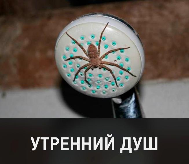 изображение: Бодрящий утренний душ #Прикол