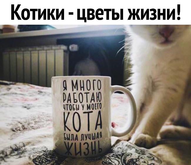 Надпись на кружке: Я много работаю, чтобы у моего кота была лучшая жизнь. - Котики - цветы жизни | #прикол