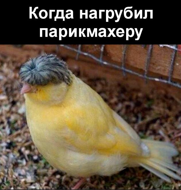 изображение: Когда нагрубил парикмахеру #Прикол