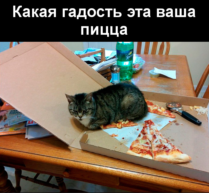 изображение: Какая гадость эта ваша пицца #Котоматрицы