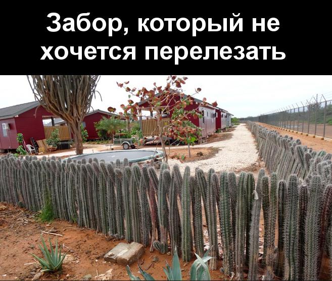 изображение: Забор, который не хочется перелезать #Прикол
