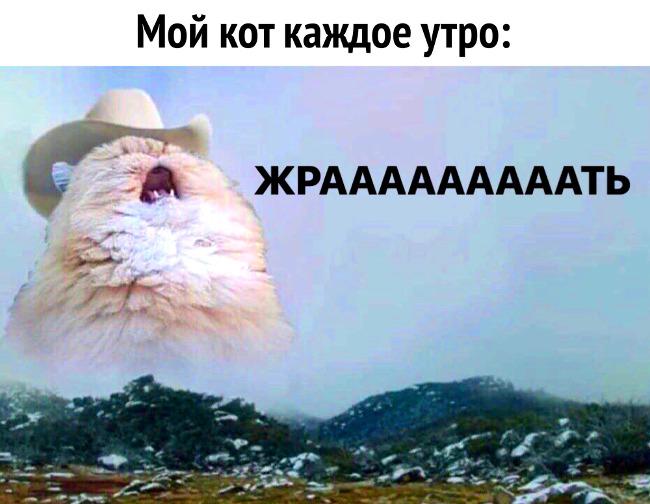 изображение: Мой кот каждое утро: Жрааааать! #Котоматрицы