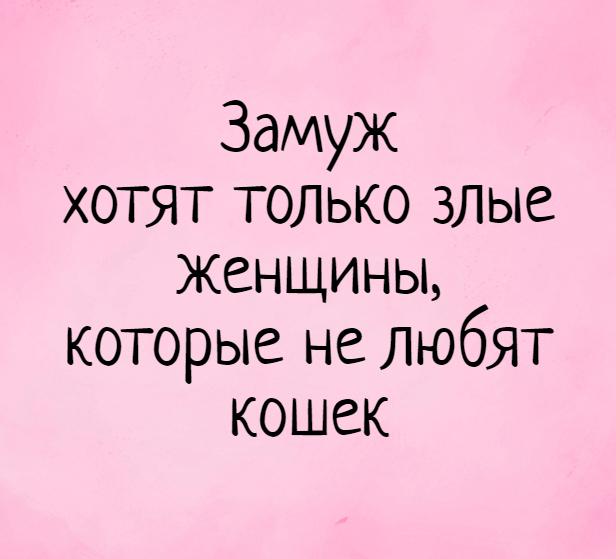 изображение: Замуж хотят только злые женщины, которые не любят кошек #Прикол