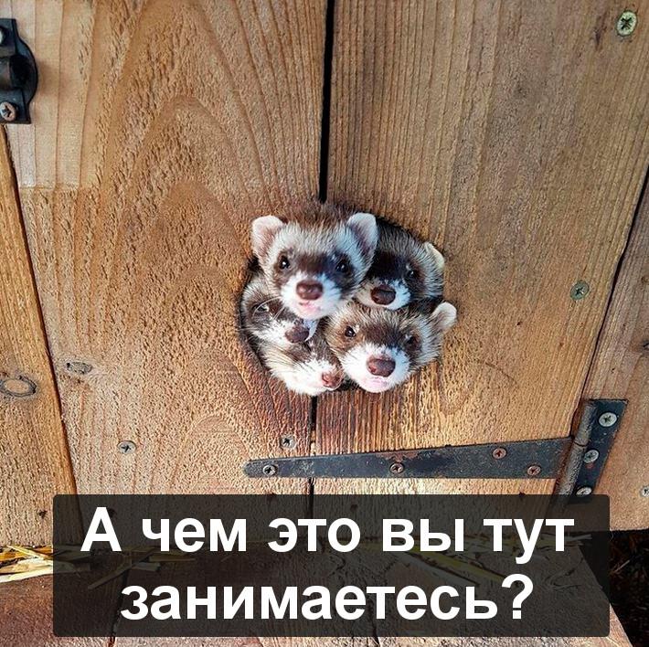 изображение: А чем это вы тут занимаетесь? #Прикол