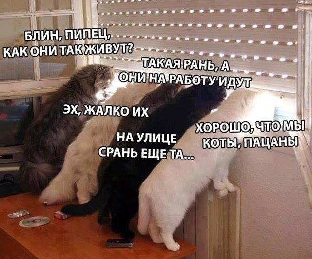 изображение: Коты смотрят в окно: - Блин, пипец, как они так живут? - Такая рань, а они на работу идут - Эх, жалко их.- На улице срань ещё та - Как хорошо, что мы коты #Котоматрицы