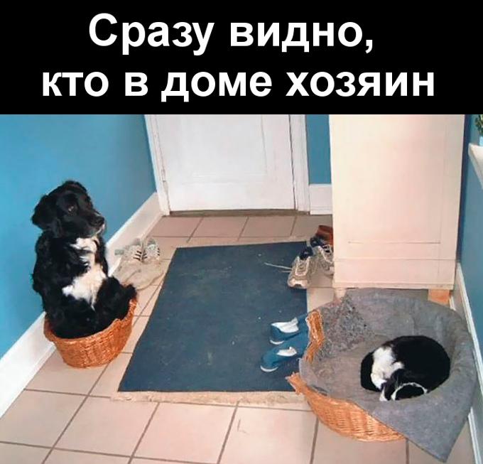 изображение: Сразу видно, кто в доме хозяин #Котоматрицы