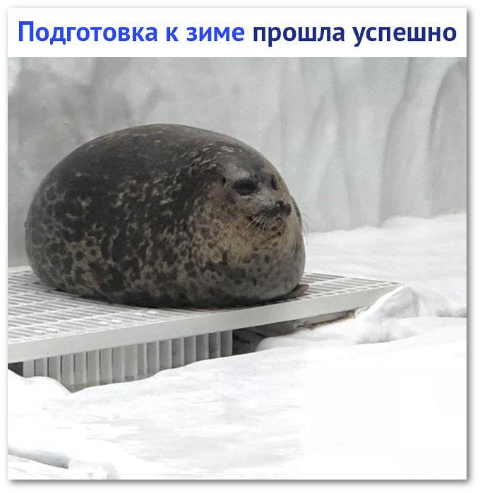 изображение: Подготовка к зиме прошла успешно #Прикол