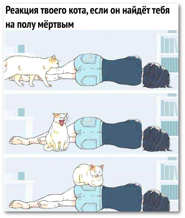 изображение: Реакция твоего кота, если он найдёт тебя на полу мёртвым #Прикол