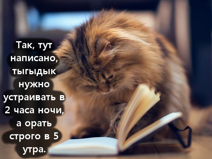 изображение: Так, тут написано, тыгыдык нужно устраивать в 2 часа ночи, а орать строго в 5 утра. #Котоматрицы