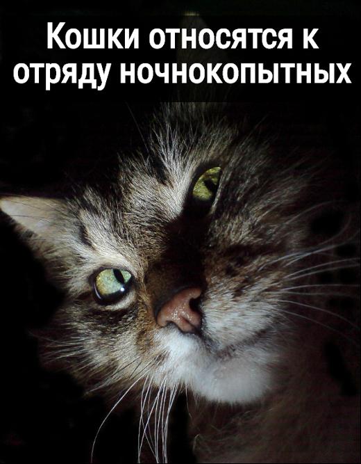 изображение: Кошки относятся к отряду ночнокопытных #Котоматрицы