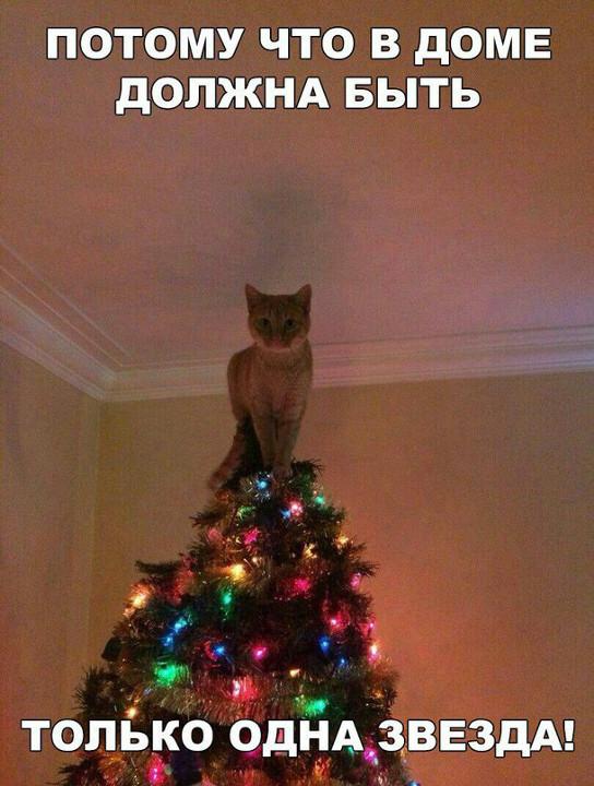 изображение: Потому что в доме должна быть только одна звезда! #Котоматрицы