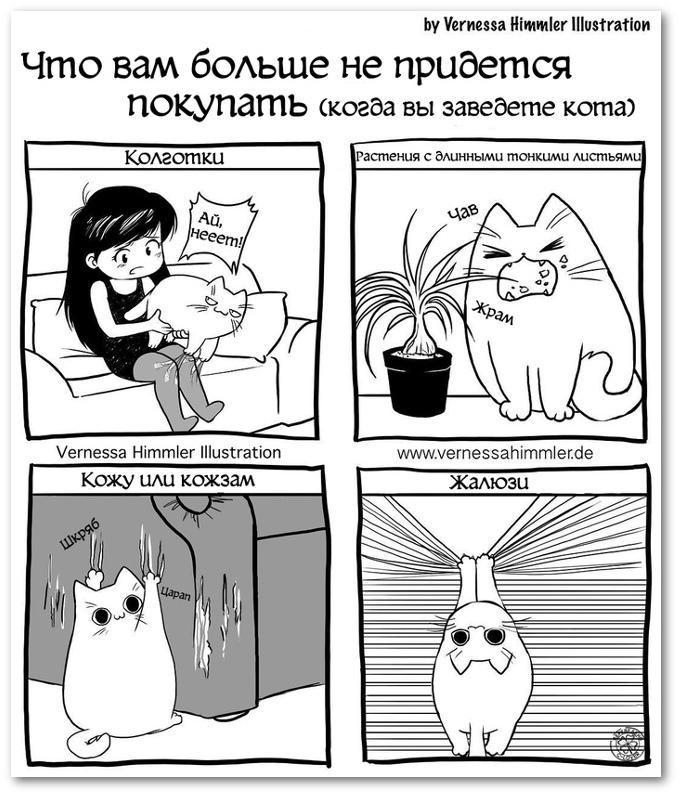 Что вам больше не придётся покупать, когда вы заведёте кота: колготки, растения с длинными тонкими листьями, кожу или кожзам, жалюзи | #прикол