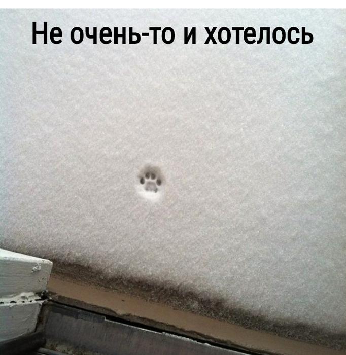 изображение: Не очень-то и хотелось #Котоматрицы