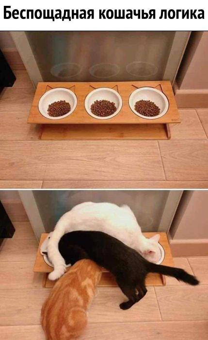 изображение: Беспощадная кошачья логика #Котоматрицы
