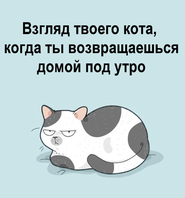 изображение: Взгляд твоего кота, когда ты возвращаешься домой под утро #Прикол