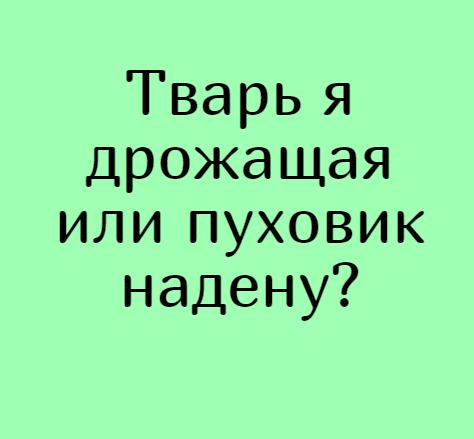изображение: Тварь я дрожащая или пуховик надену? #Прикол