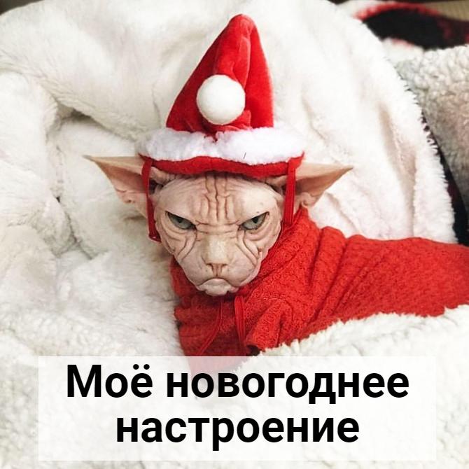 изображение: Моё новогоднее настроение #Котоматрицы