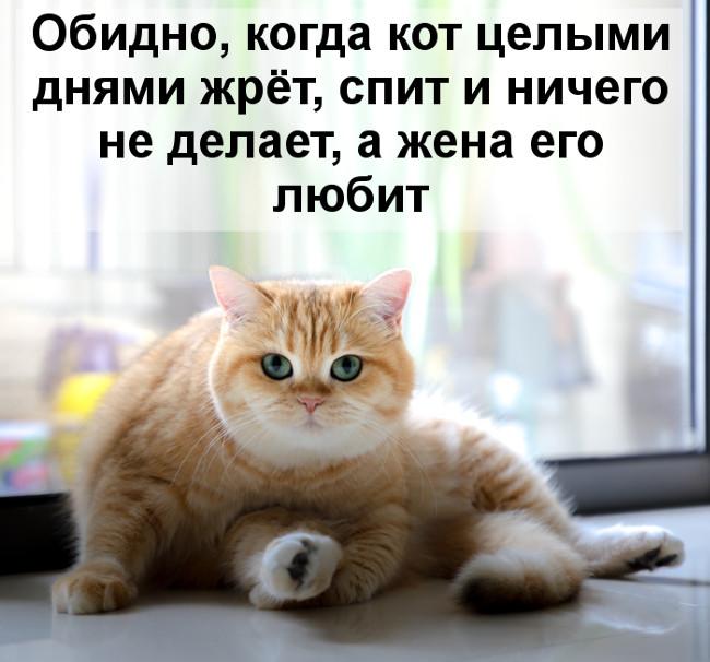 Обидно, когда кот целыми днями жрёт, спит и ничего не делает, а жена его любит | #прикол