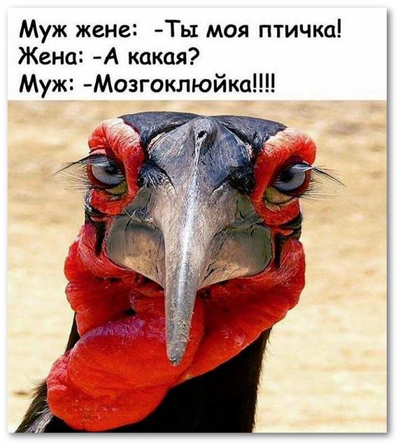 изображение: Муж жене: - Ты моя птичка! Жена: - А какая? Муж: - Мозгоклюйка!!! #Прикол