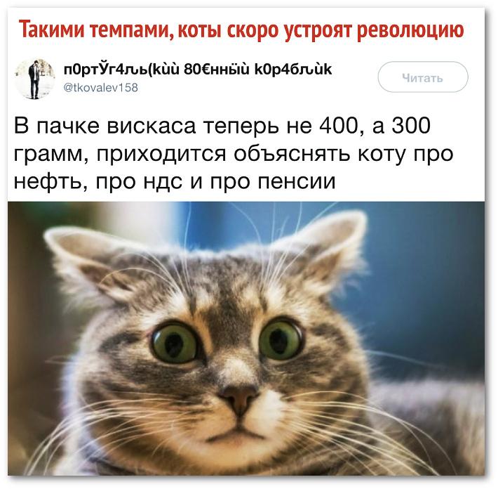 изображение: Такими темпами коты скоро устроят революцию. В пачке вискаса теперь не 400, а 300 грамм, приходится объяснять коту про нефть, про НДС и про пенсии #Прикол
